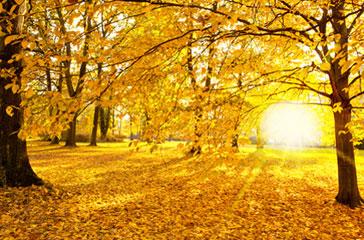 Bild Herbstferien